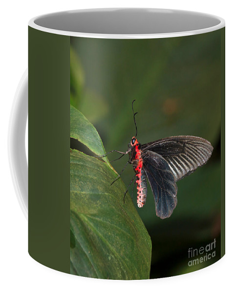 Butterfly Coffee Mug featuring the photograph Common Rose Butterfly by Louise Heusinkveld