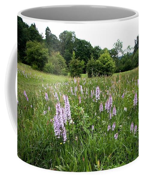 Orchid Coffee Mug featuring the photograph Common Spotted Orchids by Bob Kemp