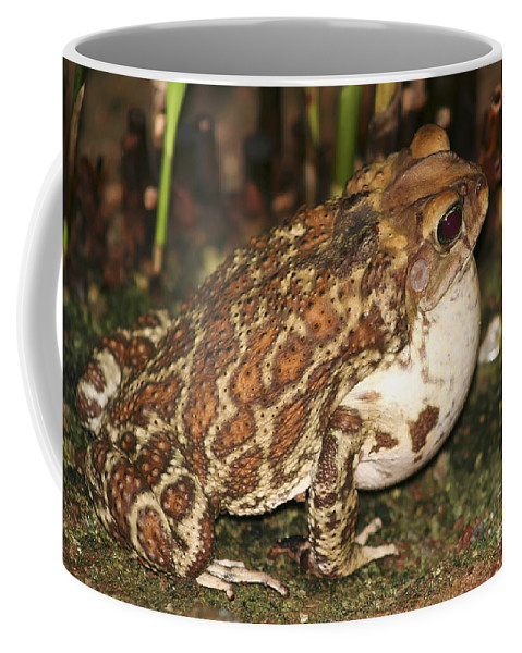 Animal Coffee Mug featuring the photograph Common Toad by Teresa Zieba