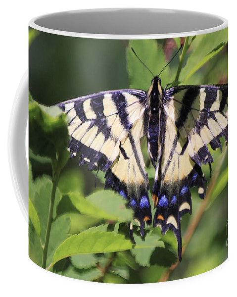 Butterfly Coffee Mug featuring the photograph Common Yellow Swallowtail by Deborah Benoit