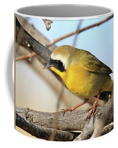Common Yellowthroat Coffee Mug featuring the photograph Common Yellowthroat #2 by Bob Zeller