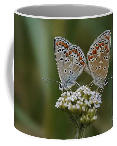 Detail Coffee Mug featuring the photograph Comtact by Michal Boubin