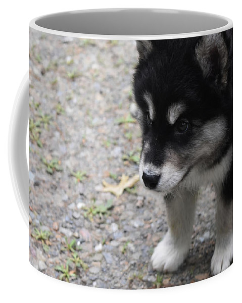 Alusky Coffee Mug featuring the photograph Concern On The Face Of An Alusky Puppy by DejaVu Designs