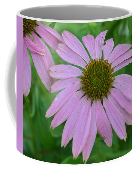 Flowers Coffee Mug featuring the photograph Coneflower by Charles HALL