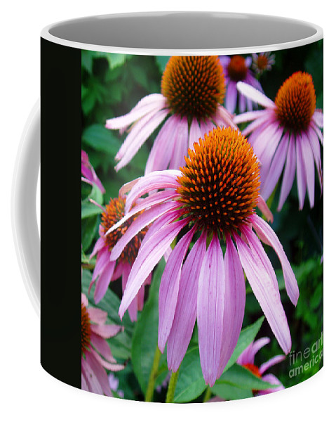 Coneflowers Coffee Mug featuring the photograph Three Coneflowers by Nancy Mueller