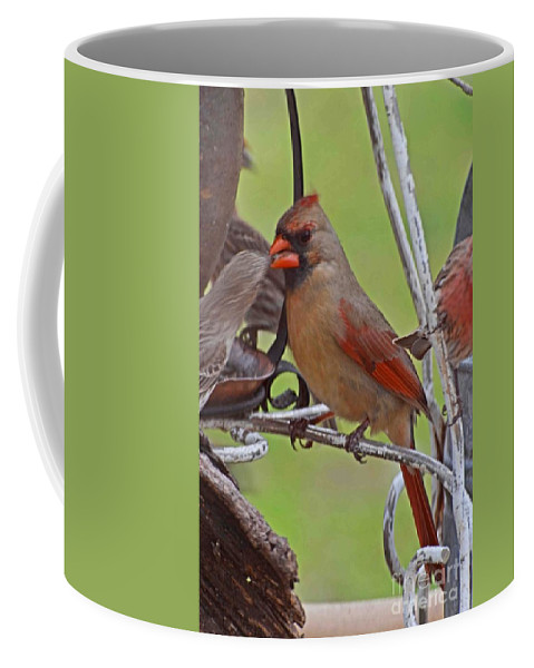 Nature Coffee Mug featuring the photograph Confrontation by Debbie Portwood