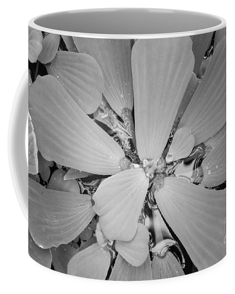Nature Coffee Mug featuring the photograph Conservatory Nature In Black And White 1 by Carol Groenen