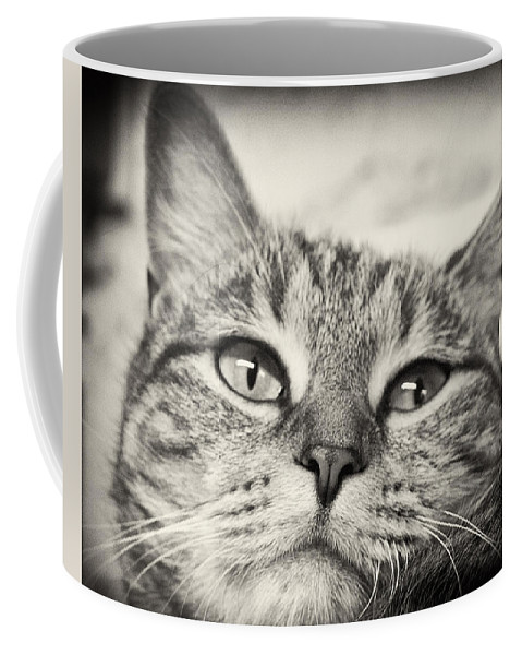 Cat Coffee Mug featuring the photograph Content by Scott Wyatt