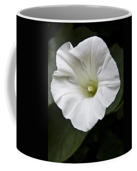 Flowers Coffee Mug featuring the photograph Convolvulus by Svetlana Sewell