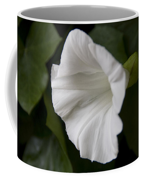 Flowers Coffee Mug featuring the photograph Convolvulus Weed by Svetlana Sewell