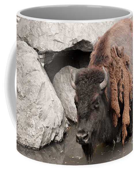 Bison Coffee Mug featuring the photograph Cooling Off by Jennifer Craft