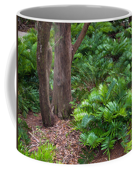 Florida; Coontie; Zamia; Integrifolia; Arrowroot; Indian; Bread; Breadroot; Plant; Rare; Wild; Prote Coffee Mug featuring the photograph Coontie Florida Arrowroot Or Indian Breadroot by Allan Hughes