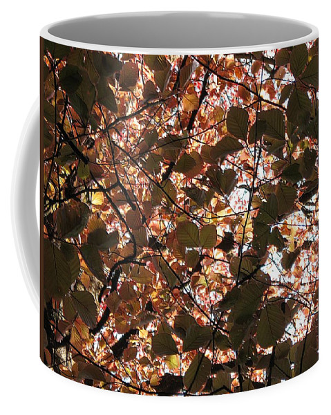 Nature Coffee Mug featuring the photograph Copper Beech by Dragica Micki Fortuna