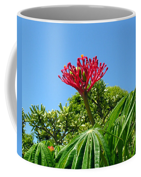 Coral; Bush; Coralbush; Weed; Flower; Leaf; Leaves; Fruit; Nut; Seed; Florida; Wild; Vacant; Lots; N Coffee Mug featuring the photograph Coral Bush With Flower And Fruit by Allan Hughes