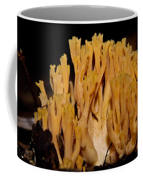 Fungi Coffee Mug featuring the photograph Coral Fungi In The Forest by Douglas Barnett