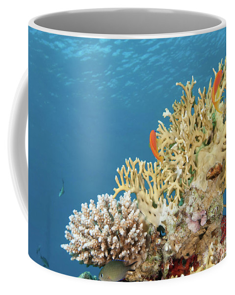 Eco System Coffee Mug featuring the photograph Coral Reef Eco System by Hagai Nativ