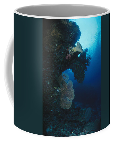 Solomon Islands Coffee Mug featuring the photograph Coral Reef Wall With Seafan And Hard by James Forte