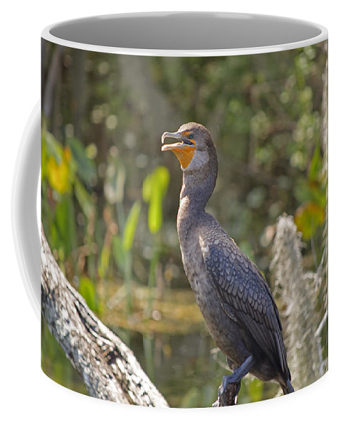 Cormorant Coffee Mug featuring the photograph Cormorant by Kenneth Albin