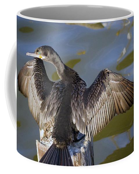 Neotropic Cormorant Coffee Mug featuring the photograph Cormorant looking back by Robert Brown
