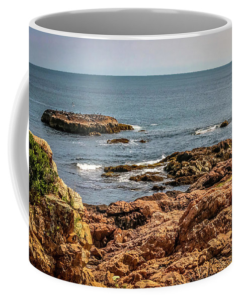 New England Coffee Mug featuring the photograph Cormorants And Seagulls Resting by Claudia M Photography