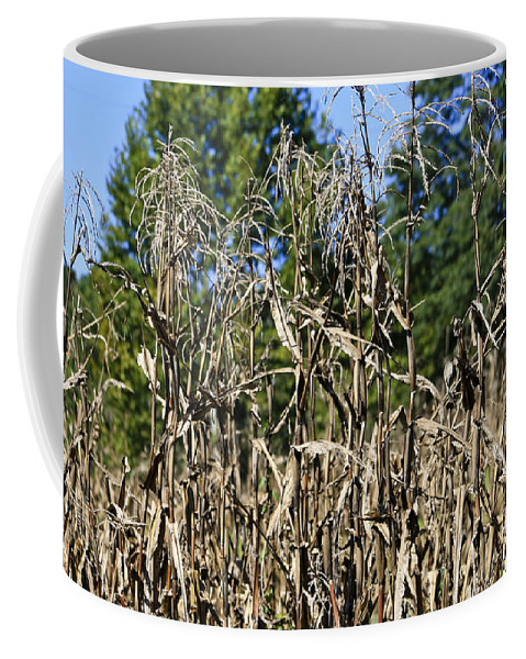 Corn Coffee Mug featuring the photograph Corn Stalks Drying by Teresa Mucha
