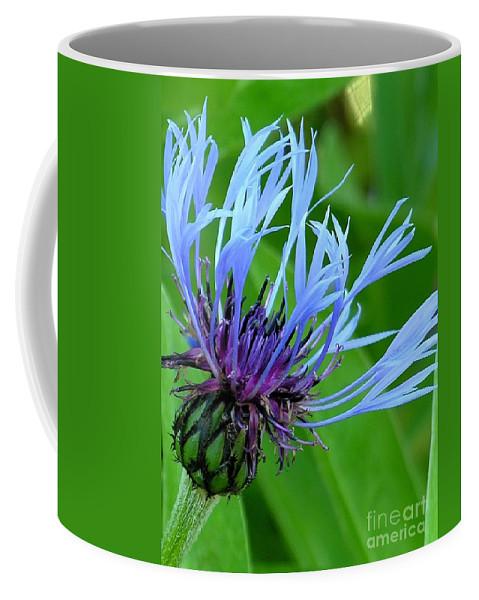 Blue Coffee Mug featuring the photograph Cornflower Centaurea Montana by Diane Greco-Lesser