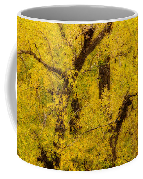 Autumn Coffee Mug featuring the photograph Cottonwood Fall Foliage Colors Abstract by James BO Insogna