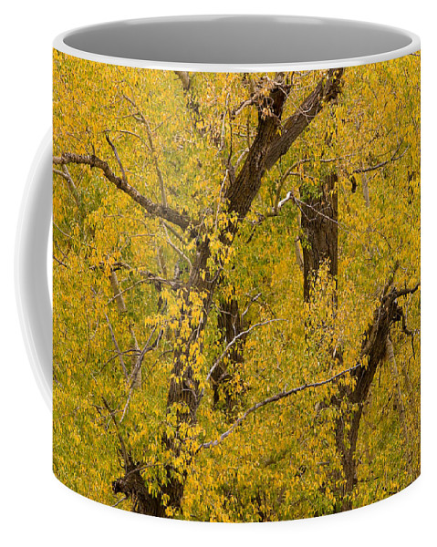 Autumn Coffee Mug featuring the photograph Cottonwood Fall Foliage Colors by James BO Insogna