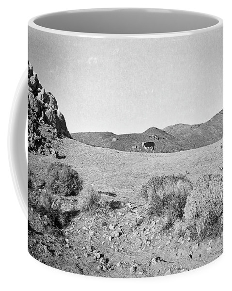 Cow Coffee Mug featuring the photograph Cow At Pyramid Lake by Susan Crowell
