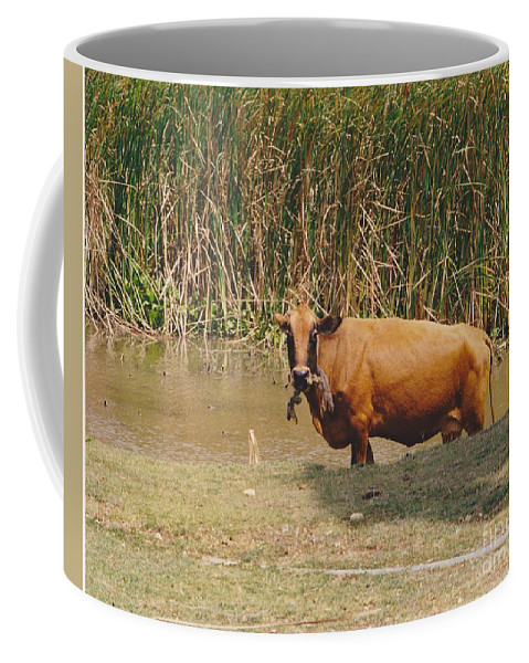 Animal Coffee Mug featuring the photograph Cow In The Field by Michelle Powell
