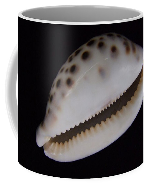 Mary Deal Coffee Mug featuring the photograph Cowry Shell by Mary Deal