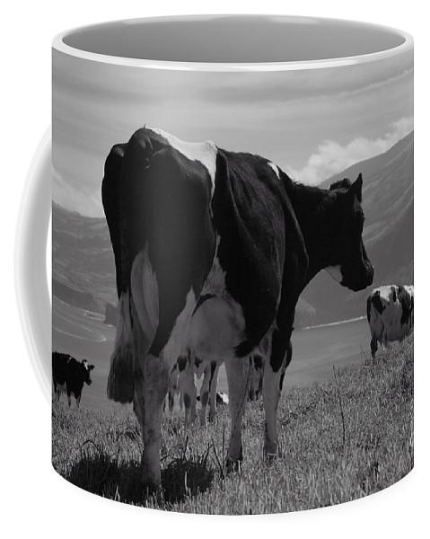 Azoren Coffee Mug featuring the photograph Cows by Gaspar Avila