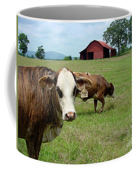 Cow Coffee Mug featuring the photograph Cows8986 by Gary Gingrich Galleries