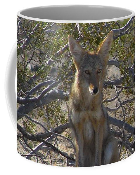 Coyote Coffee Mug featuring the photograph Coyote 3 by Carl Moore