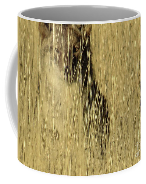 Coyote Coffee Mug featuring the photograph Coyote 3 by Christy Garavetto