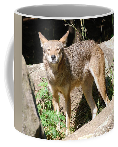 Coyote Coffee Mug featuring the photograph Coyote Grin by Eric Liller