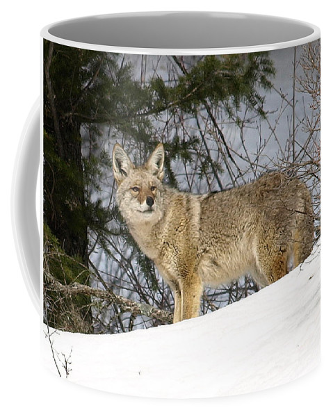 Coyote Coffee Mug featuring the photograph Coyote In Winter by DeeLon Merritt