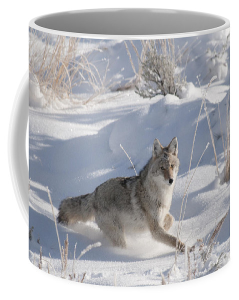 Coyote Coffee Mug featuring the photograph Coyote On The Move by Gary Beeler