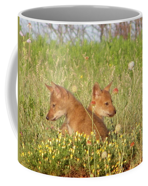 Pup Coffee Mug featuring the photograph Coyote Pups by Gale Cochran-Smith