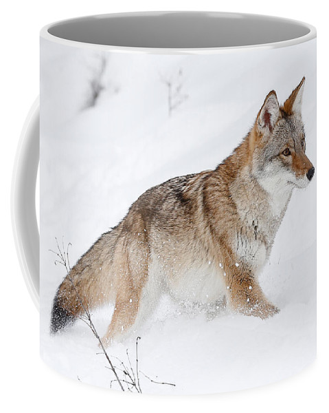 Coyotes Coffee Mug featuring the photograph Coyote Winter by Athena Mckinzie