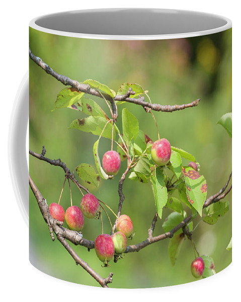 Blossoms Coffee Mug featuring the photograph Crab Apple Fruit by Bob Corson