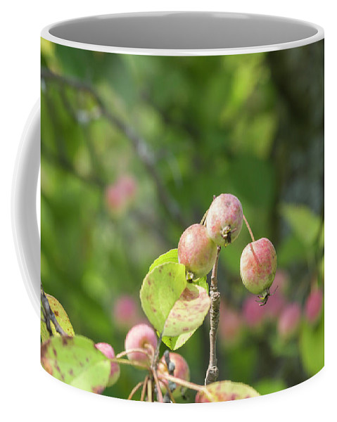 Blossoms Coffee Mug featuring the photograph Crab Apples by Bob Corson