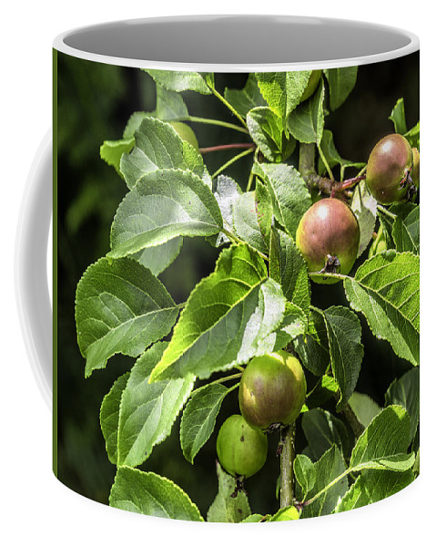 Apples Coffee Mug featuring the photograph Crab Apples by Nick Bywater