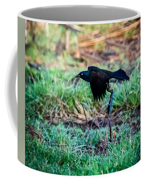 Jan Holden Coffee Mug featuring the photograph Grackle In The Morning by Jan M Holden