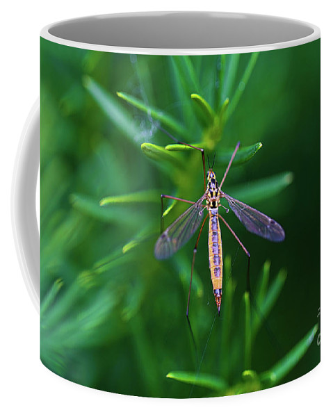 Insect Coffee Mug featuring the photograph Crane Fly by Amber D Hathaway Photography