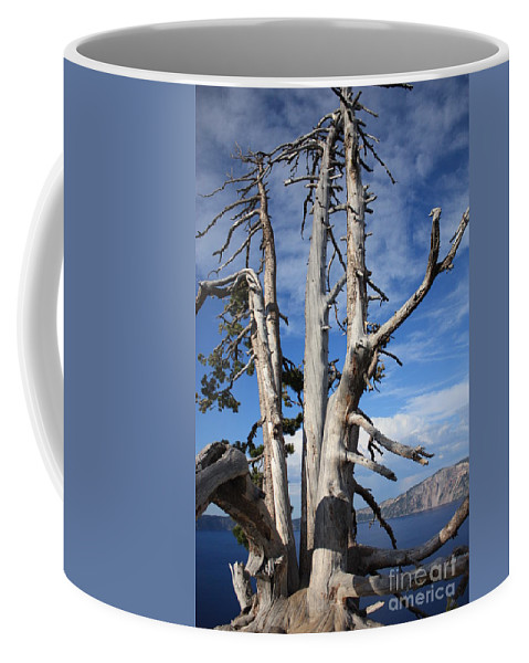 Tree Coffee Mug featuring the photograph Crater Lake Tree by Carol Groenen