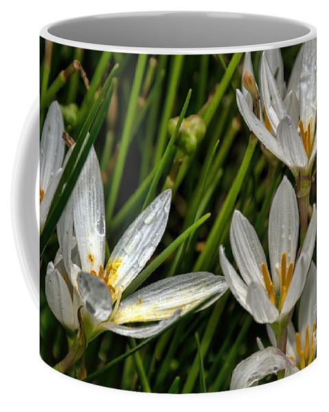 Crocus White Flowers Coffee Mug featuring the photograph Crocus White Flowers by Diana Mary Sharpton