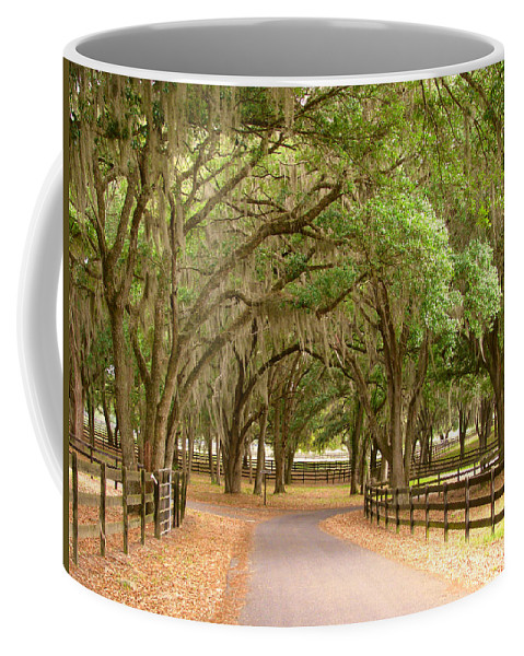 Parks Coffee Mug featuring the photograph Crossroads by Adele Moscaritolo