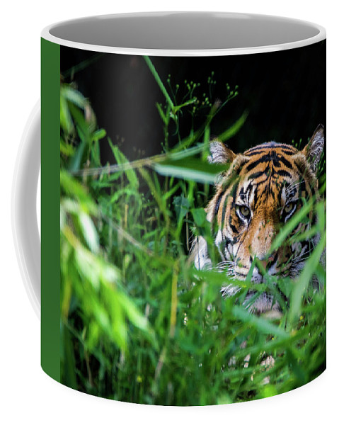 Tiger Coffee Mug featuring the photograph Crouching Tiger Hidden Cameraman by James Farrell