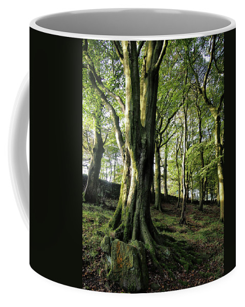Forest Coffee Mug featuring the photograph Crow Nest Woods by Philip Openshaw